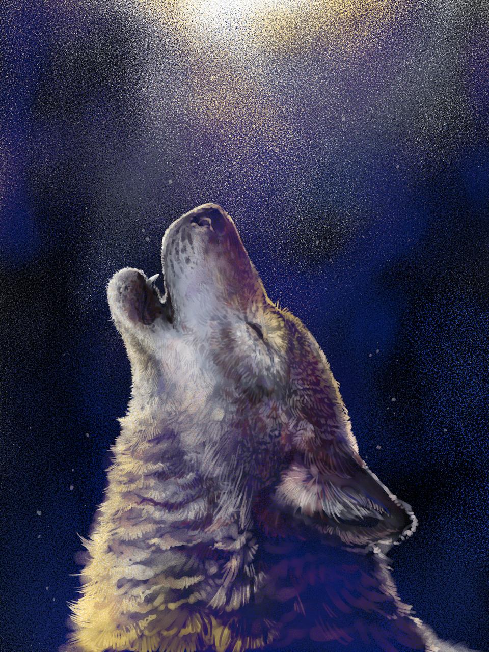 wolf Illust of Naka medibangpaint animal wolf