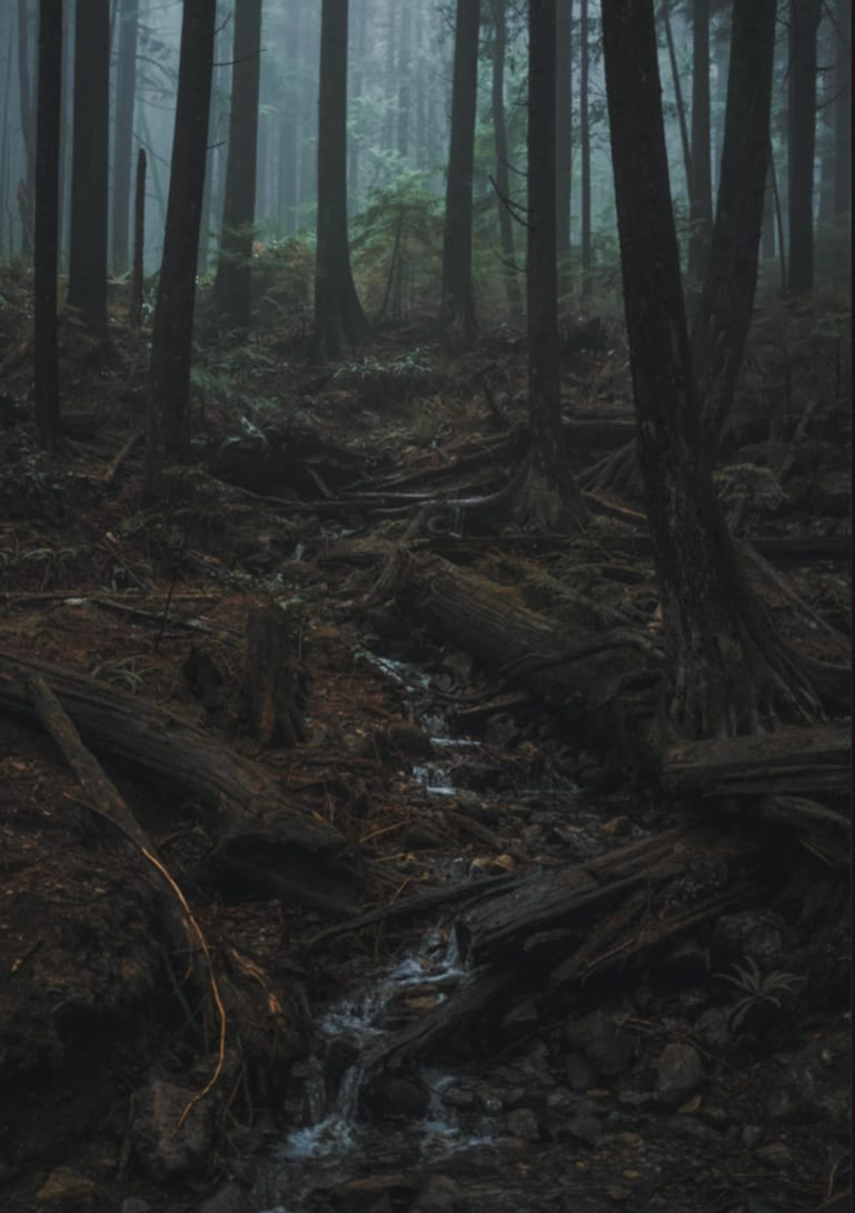 Lichen Illust of Mossy Firefly forest Fungi Dark