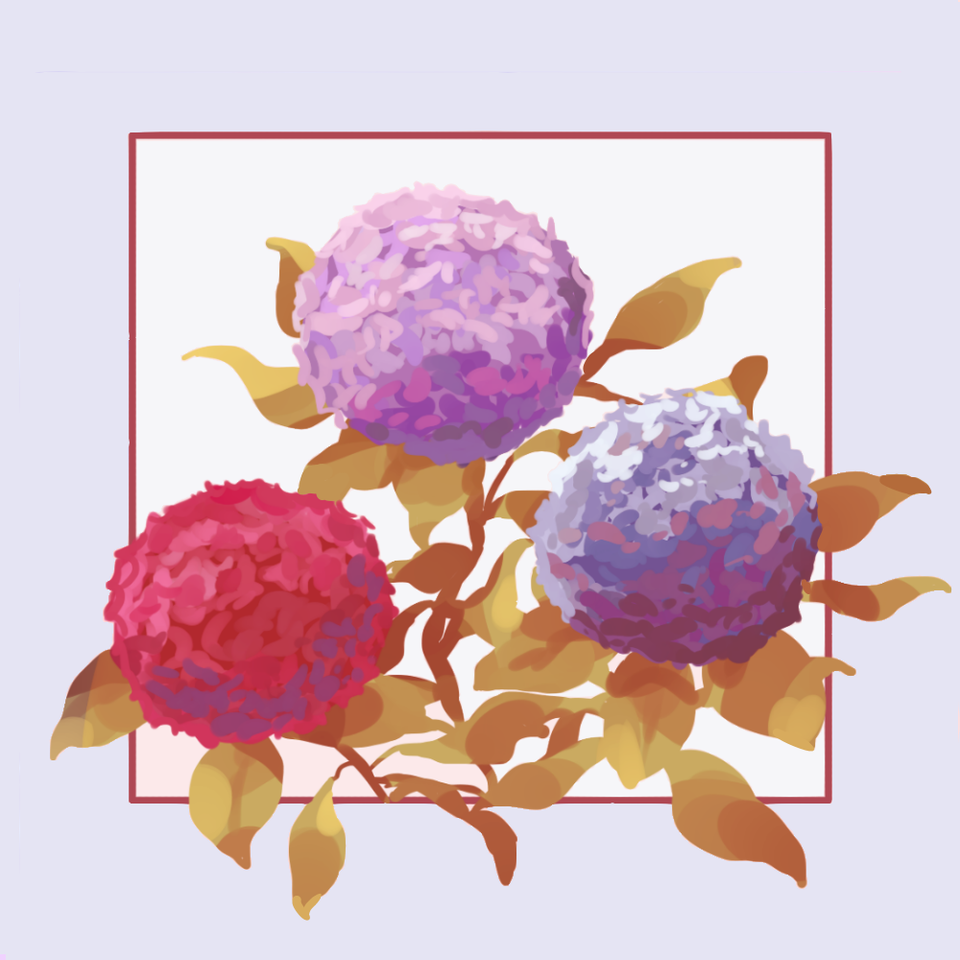 Hydrangea Illust of Mumechi pink blue flower colour art drawing iPad_raffle purple cute