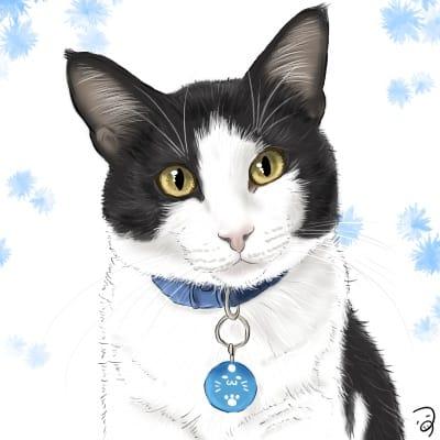 しろくろくん。 Illust of つぅ 白黒ハチワレ cat realistic