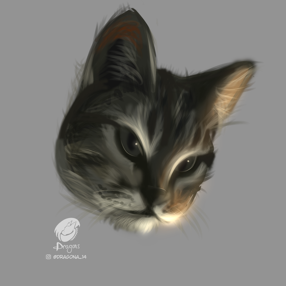 #4 Kenobi Illust of dragona_14 original commissionsopen fanart ilustration mascot digital illustration pet illustrations commission