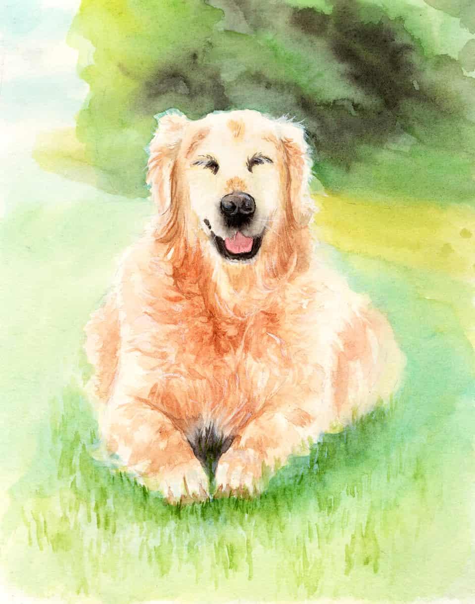 金毛 Illust of 流水静 DOGvsCAT_DOG dog painting handdrawn sketch 水彩画 animal ゴールデンレトリバー 板绘 illustration