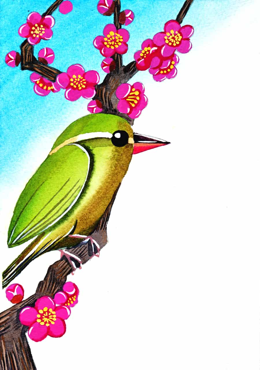 梅に「うぐいす」 Illust of おち☆よしかず(Occhiiy:オッチー☆) brag.your.country 梅 透明水彩 紅梅 アナログの本気 はる 日本 ウグイス