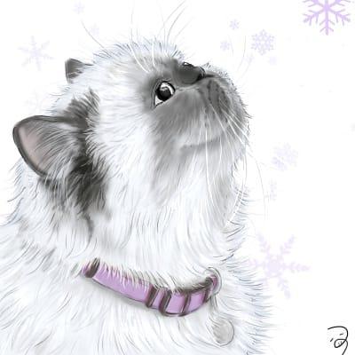 ひまらやんさん。 Illust of つぅ ヒマラヤン cat realistic
