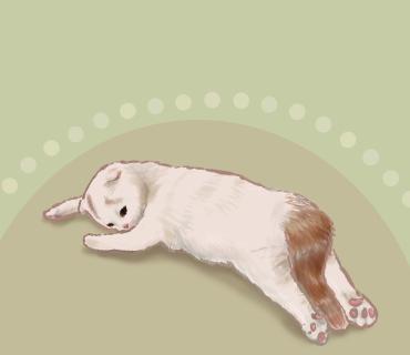 猫  Illust of メリー medibangpaint cat ダラー illustration