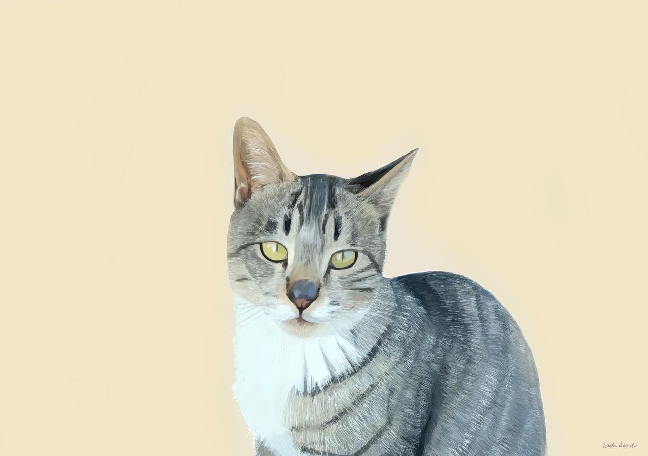 カメラを見つめる猫 Illust of Kanda DOGvsCAT_CAT medibangpaint animal digital cat