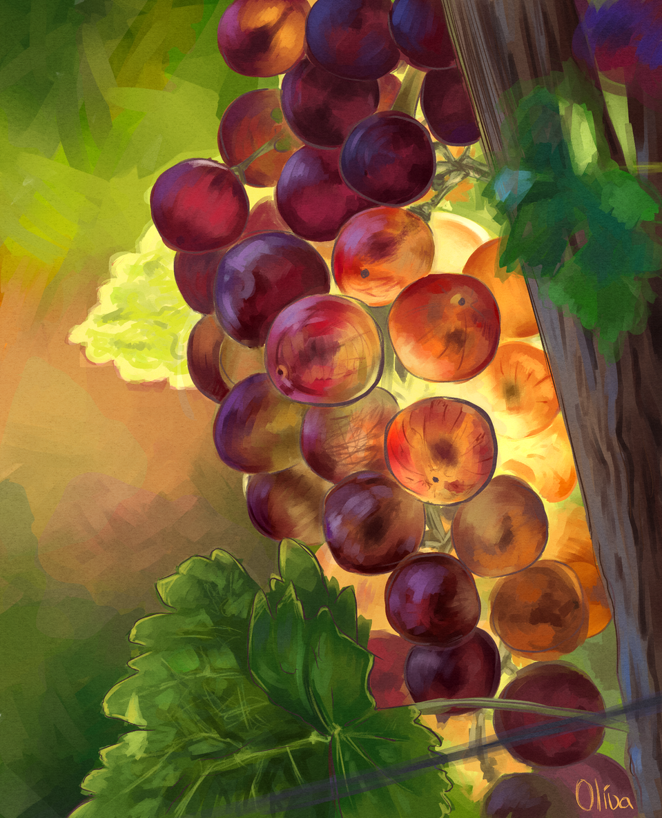 стадик Illust of Oliva grape птицы