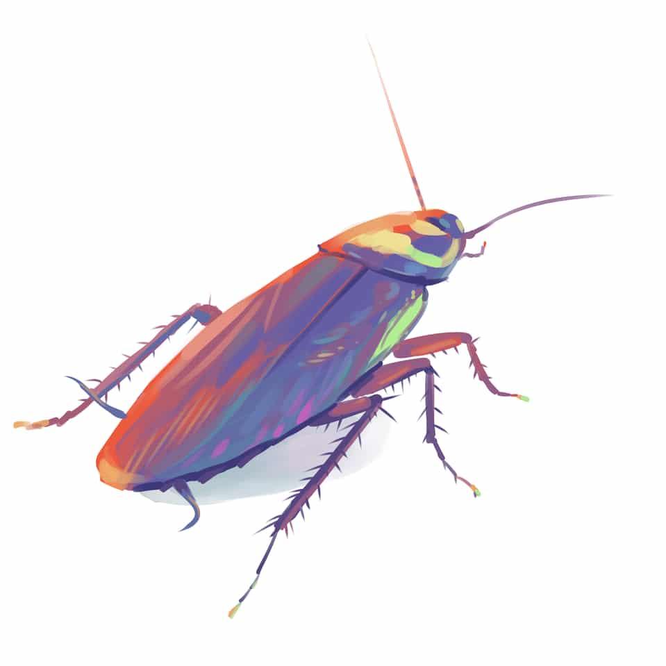 骚甲(ゴキブリ) Illust of 村正兄的咩滴棒 April.2020Contest:Color color insect