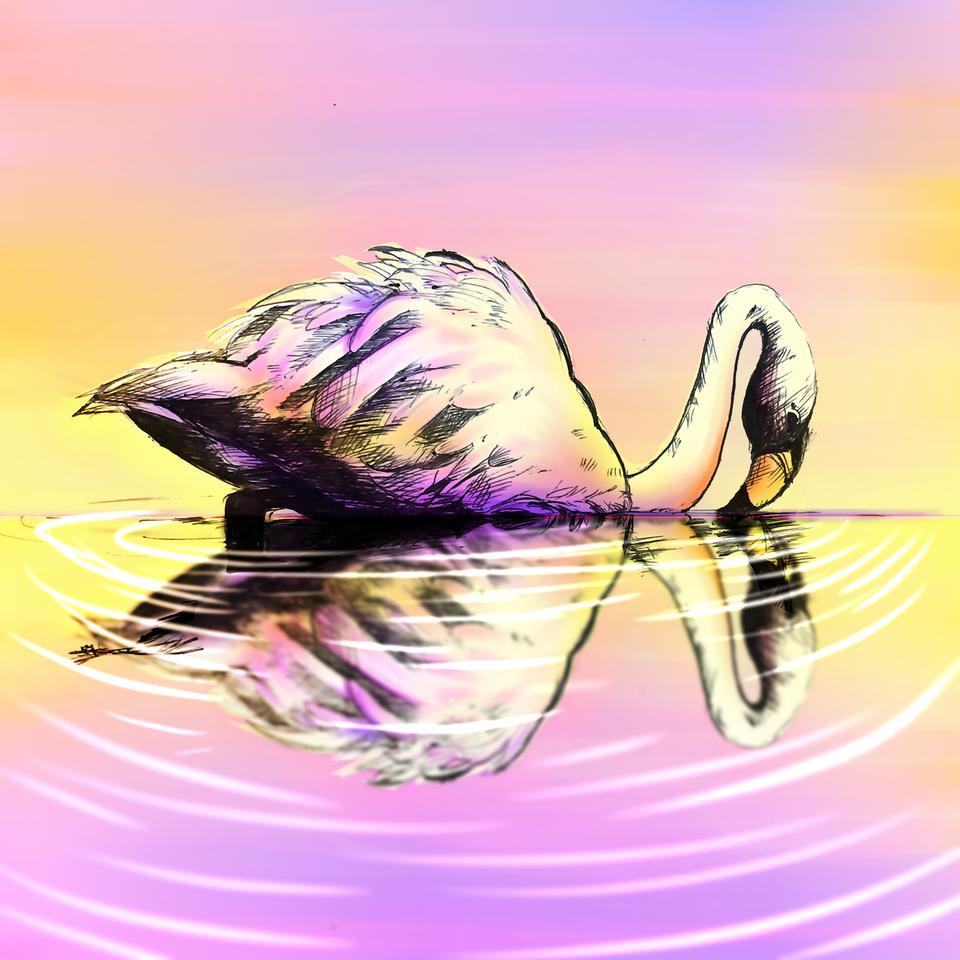 Swan Lake Illust of VioletHoshimi medibangpaint birds color original 1hDrawingChallenge