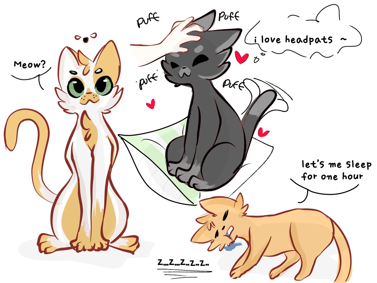 kitty cat ♡