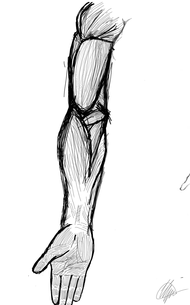 Hand Human Anatomy Art Dooobermart Illustrations Medibang