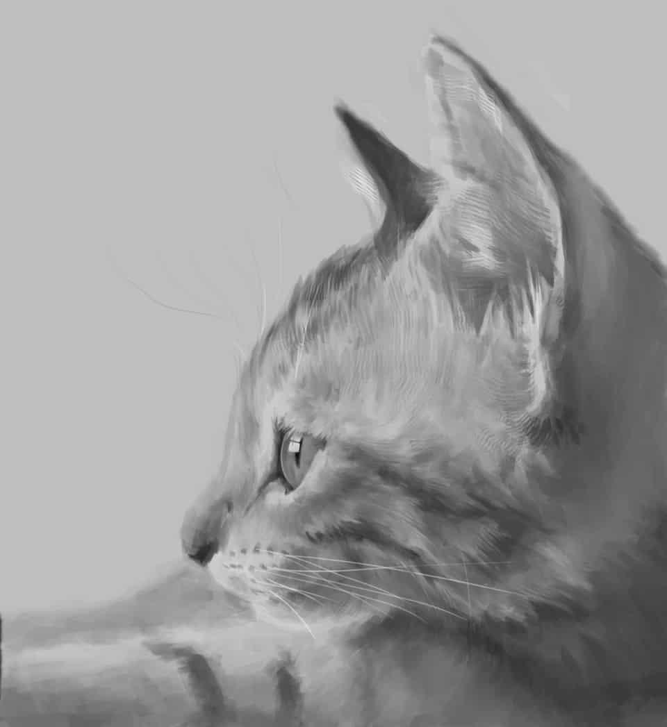 沉思 Illust of Umekawa 貓 cat 写実画 blackandwhite medibangpaint リアル絵