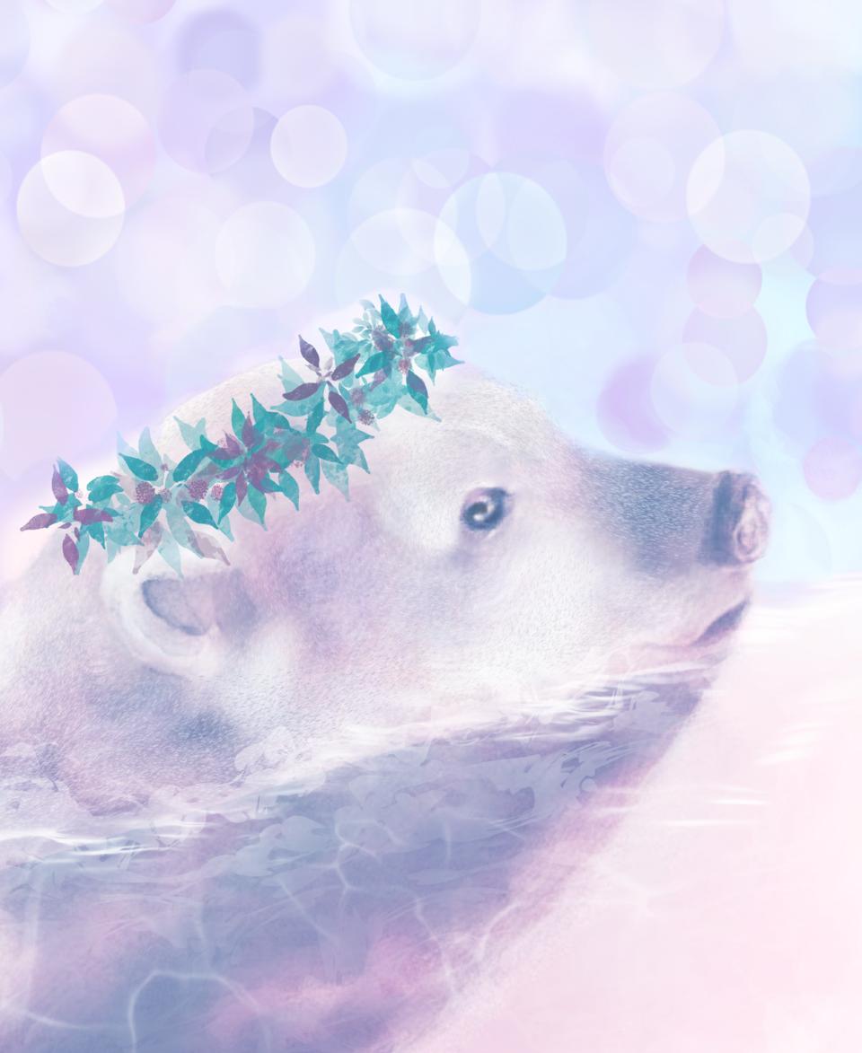 Winter polar bear  Illust of Sunevto bear Thanksgiving animal polarbear sea oc watercolor swimming winter Christmas