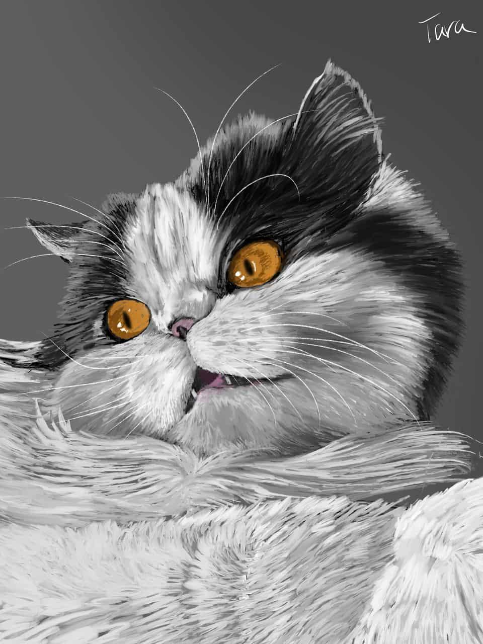 エキゾチックロングヘアー Illust of ekadhooj DOGvsCAT_CAT