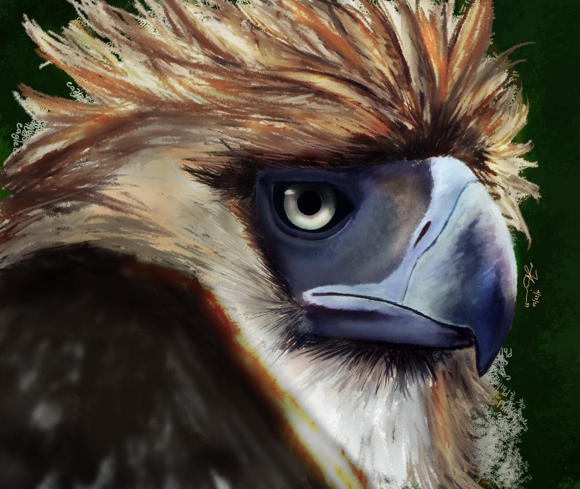 ANIMAL/PHILIPPINE EAGLE Illust of jmatt37art brag.your.country birds painting color animal