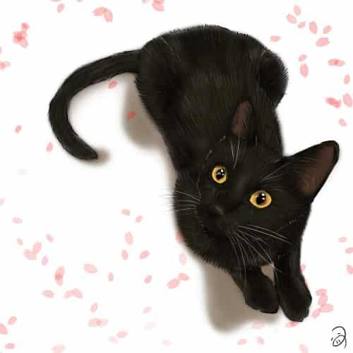 さくらとくろいこ Illust of つぅ ARTstreet_Ranking cat 黒猫