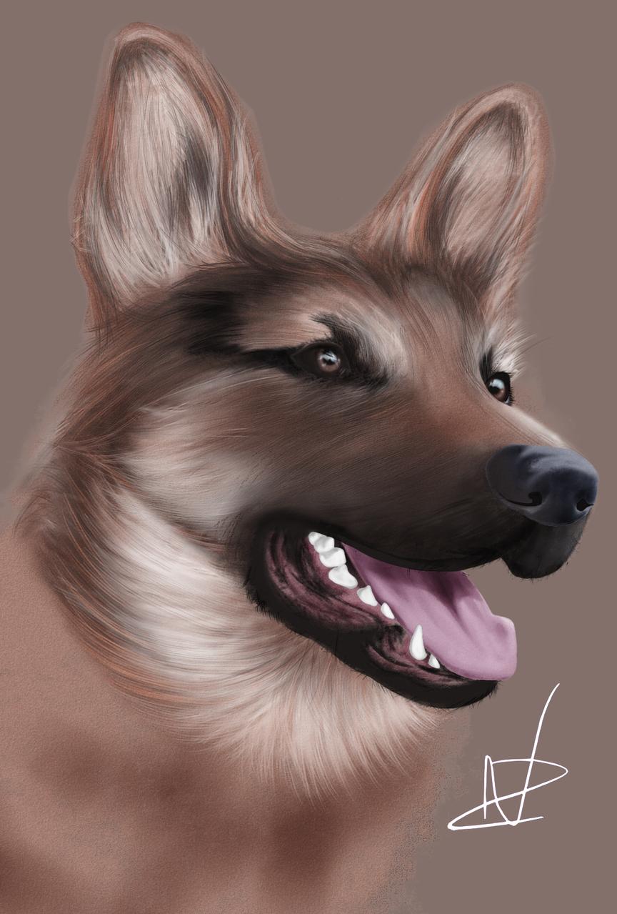 German Shepard  Illust of Zunou DOGvsCAT_DOG dog germanshepard portrait