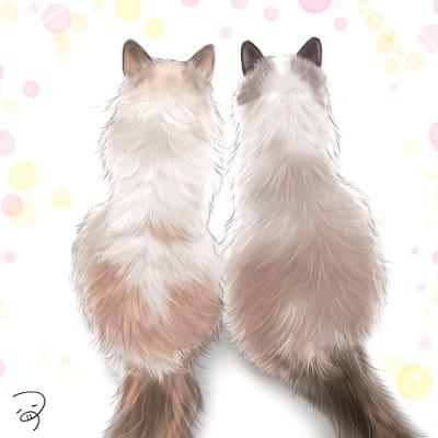 なかよしらぐどーるふうふ。 Illust of つぅ August2021_Animal cat ラグドール