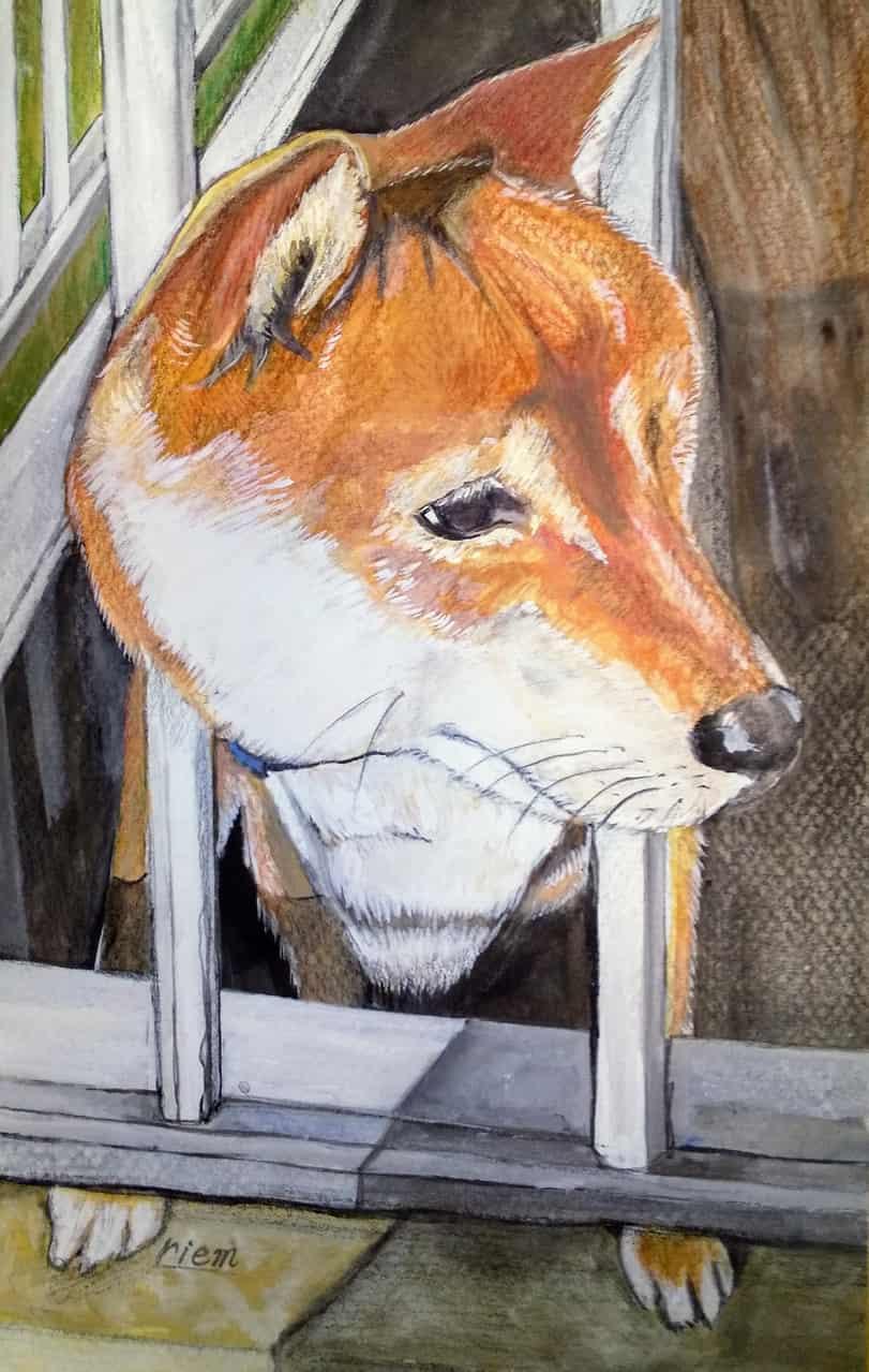 なでてもいいよ Illust of riem DOGvsCAT_DOG original animal ShibaInu kawaii dog handdrawn