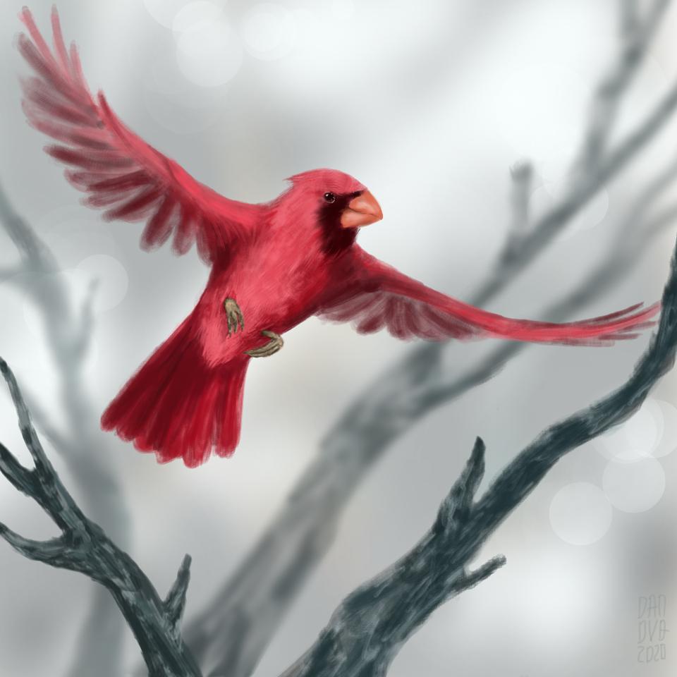 Red Bird Illust of daudnov medibangpaint animal nature wings birds flying red