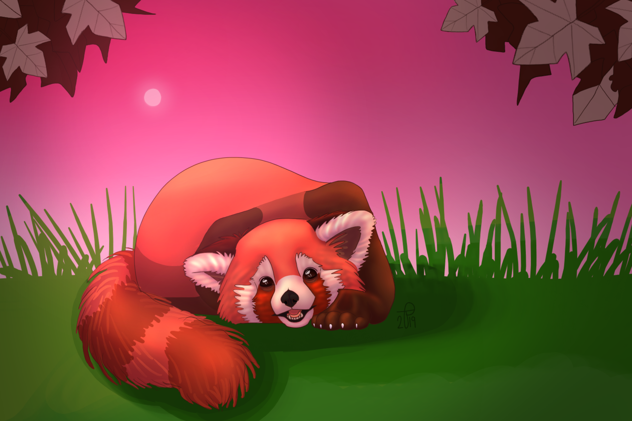 a happy red panda