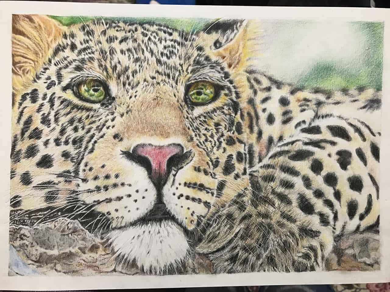ヒョウ Illust of なっちゃん ヒョウ animal 豹 coloredpencil