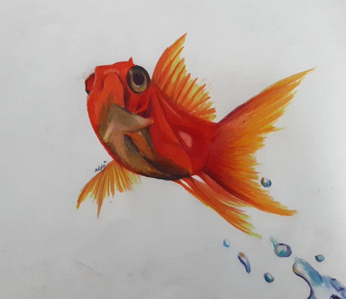 pez dorado  Illust of Addy🌸 medibangpaint