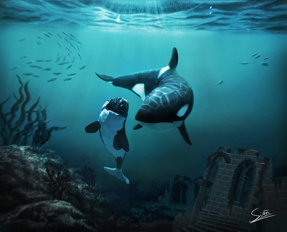 Wild Orcas Illust of Sián Faoláin orca killerwhalepainting underwater killerwhales sianfaolain wildlife digitalpainting orcapainting orcas killerwhale