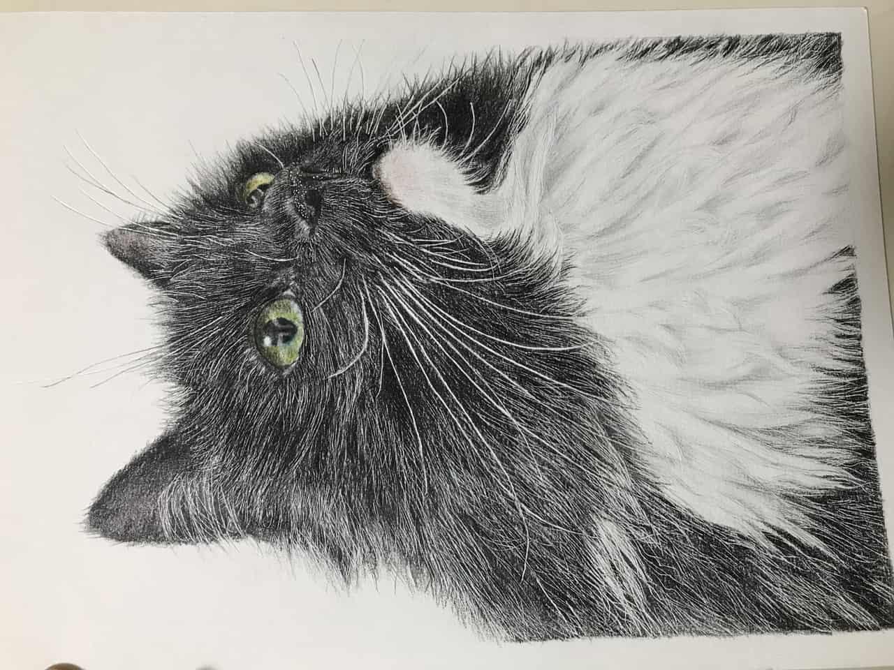 もな Illust of なっちゃん cat animal 色鉛筆絵 illustration coloredpencil 色鉛筆画 写実