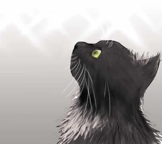 Illust of なっちゃん cat illustration