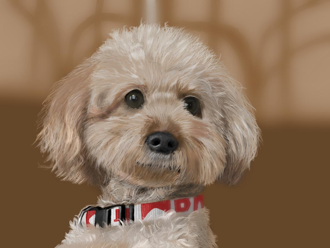 モモちゃん Illust of カネとも medibangpaint animal リアル絵 dog トイプードル