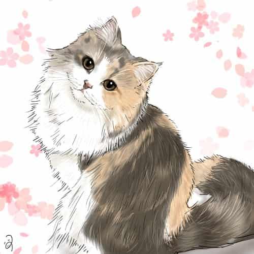 もふもふちゃん Illust of つぅ ARTstreet_Ranking cat スコティッシュフォールド
