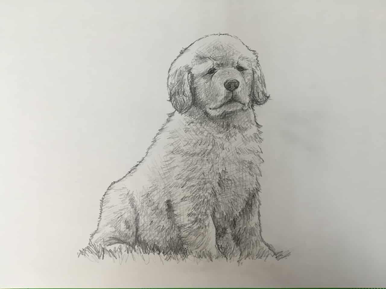 鉛筆画(ゴールデンレトリバー&なんかの猫) Illust of エインセル 犬と猫