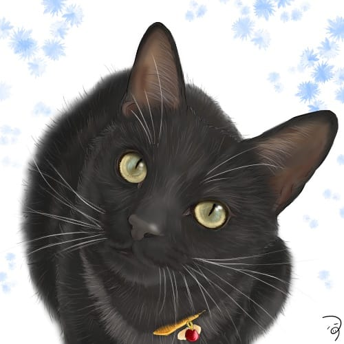 くろねこくん。 Illust of つぅ cat 黒猫