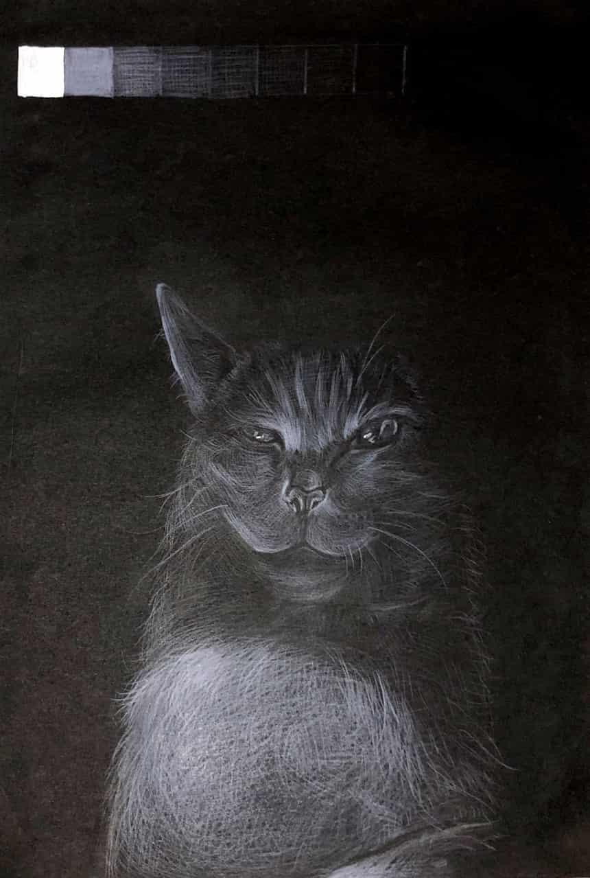 An evil cat