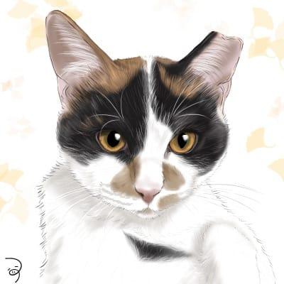 みけちゃん。 Illust of つぅ August2021_Animal cat 三毛猫