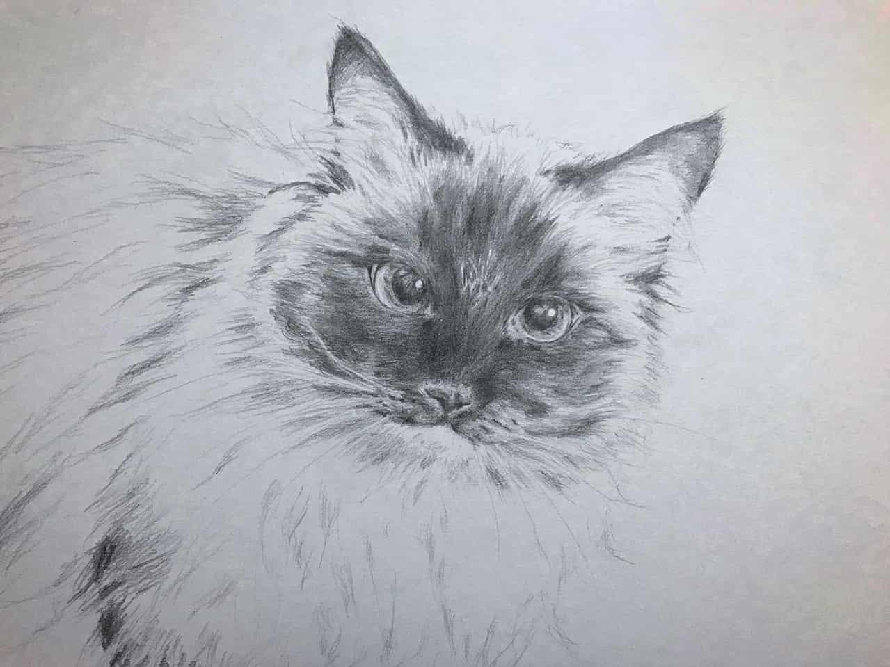 あおくん Illust of なっちゃん DOGvsCAT_CAT 鉛筆画