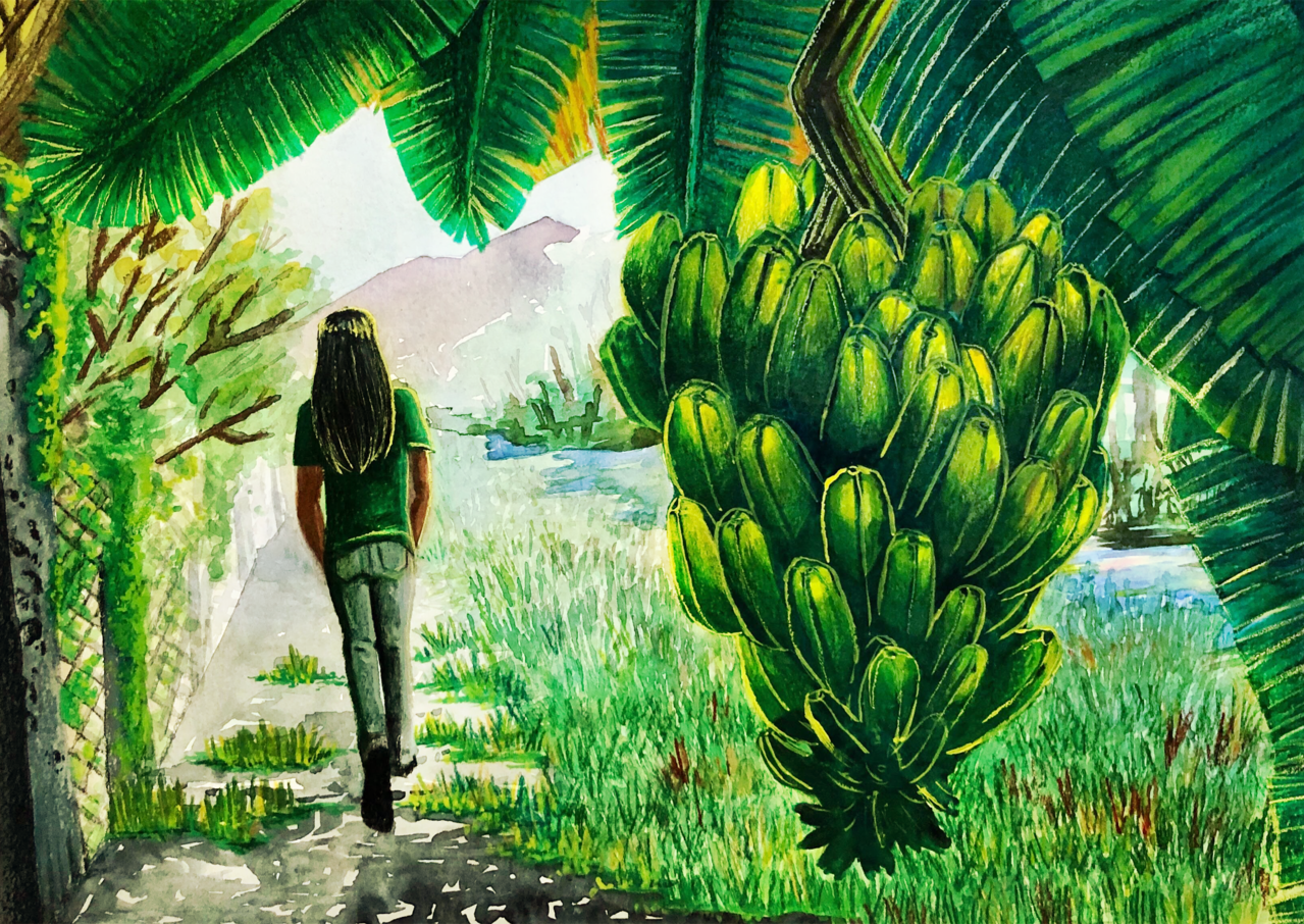 Animals and Plants, A Bunch of Bananas Illust of zoeves brag.your.country Banana Tree Walk River Morning Bananas