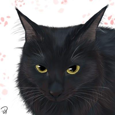 もふもふくろねこちゃん Illust of つぅ black cat 毛長猫 黒猫 medibangpaint5000