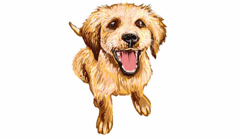 Puffy dog  Illust of lokhnet September2020_Contest:Furry dog animal medibangpaint cat