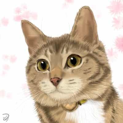 キジトラちゃん Illust of つぅ cat キジトラ