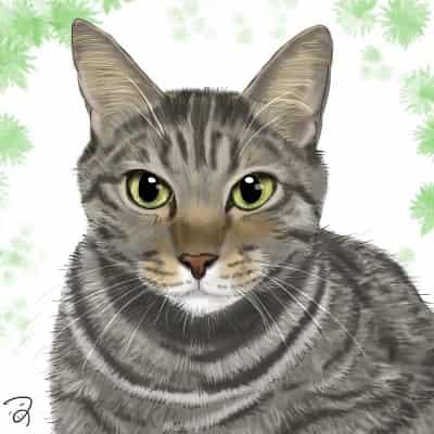 しぶめんさん。 Illust of つぅ cat キジトラ