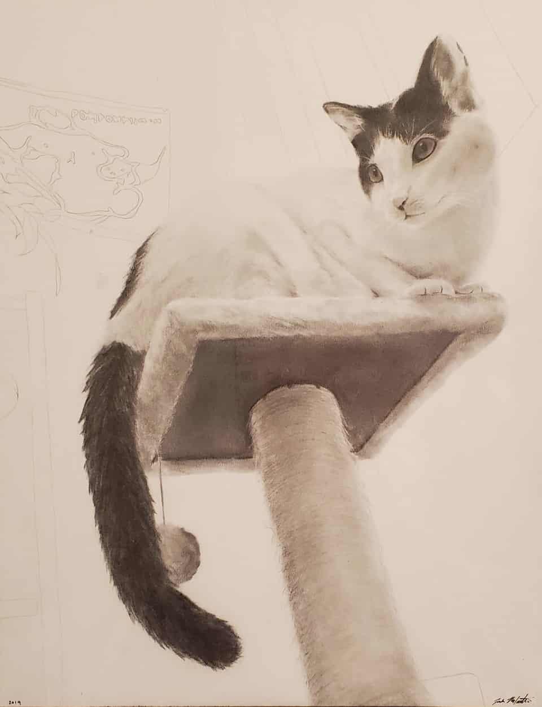 Boba Illust of daibao DOGvsCAT_CAT kawaii cat photorealism cute catillustration