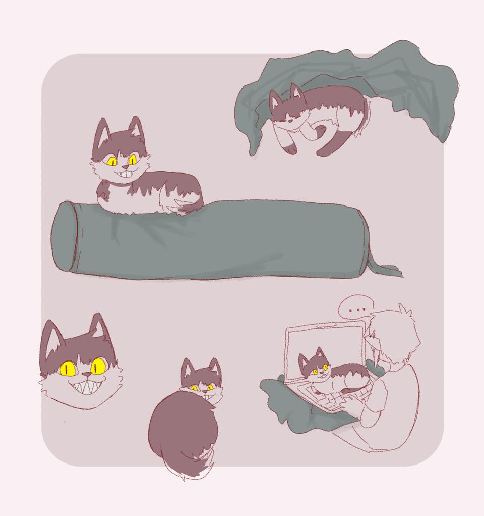 when u r a cat