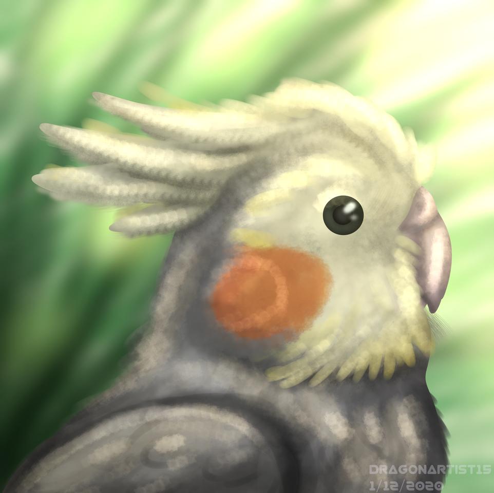 Kai Illust of Dragon Artist medibangpaint painting portrait birds Cockatiel