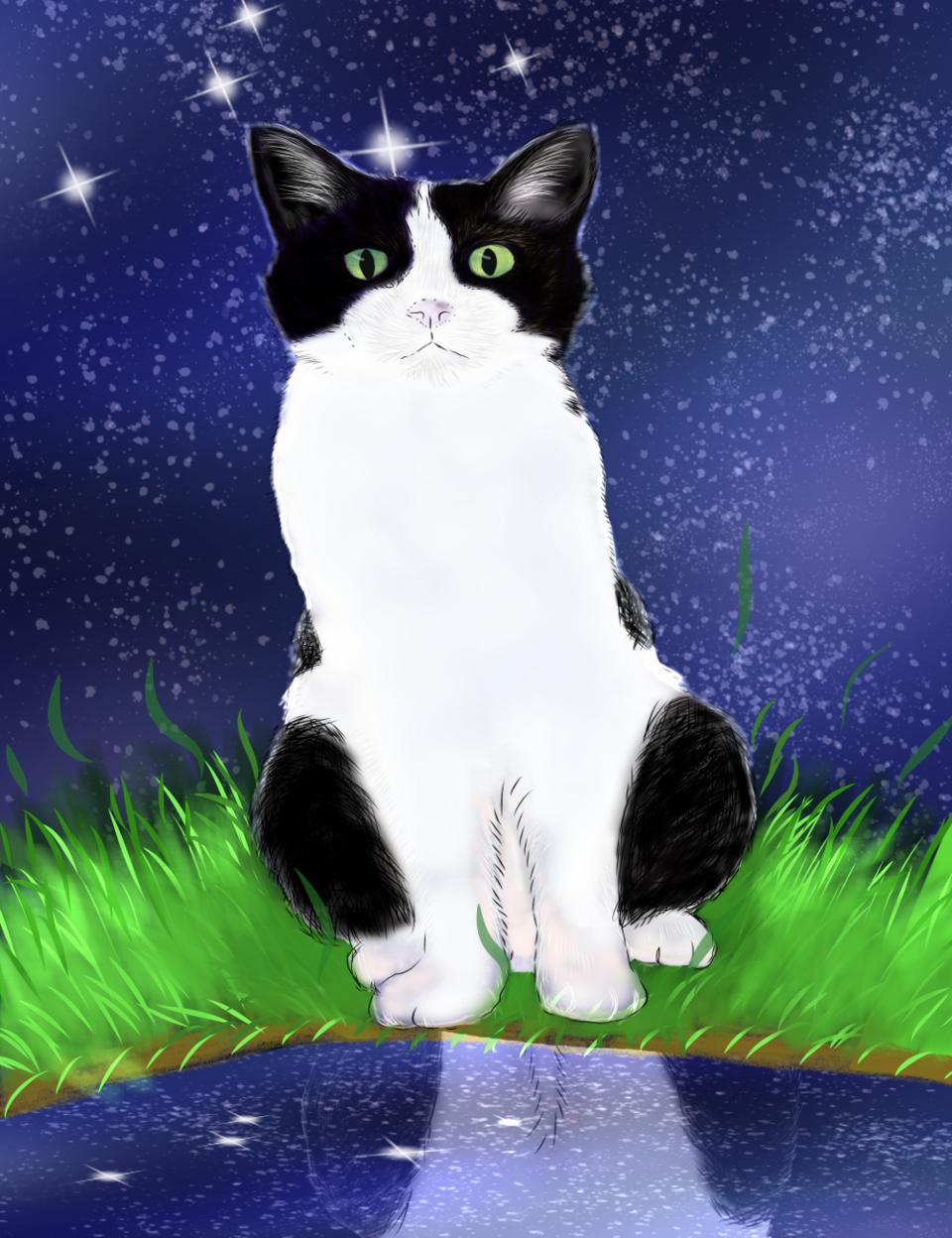 我が家の猫 Illust of すぃりゅう September2020_Contest:Furry cat ハチ割れ 愛猫 blackandwhite 家猫