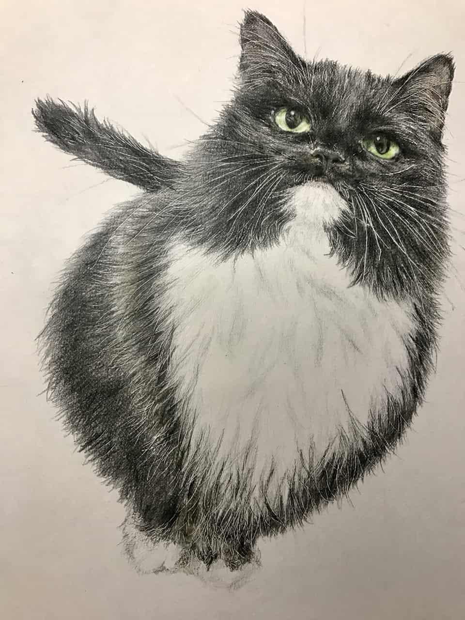 もな Illust of なっちゃん DOGvsCAT_CAT 絵描きさんと繋がりたい animal 色鉛筆画 cat