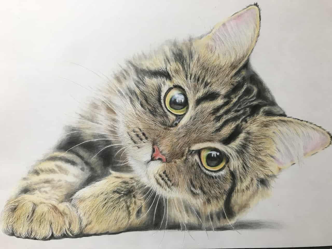 ねこ Illust of なっちゃん 色鉛筆画 coloredpencil cat
