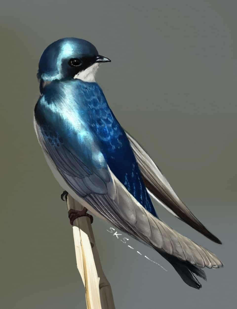 Iridescent Swallow