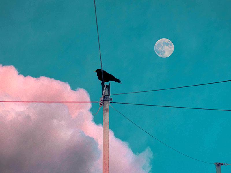 Jungfrau Black Bird Illust of G-Noor fantasy April.2020Contest:Color ARTstreet_Ranking sky painting original moon scenery illustration